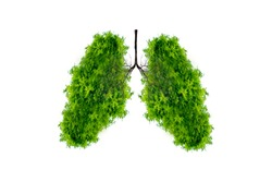 Lung green tree-shaped images, medical concepts