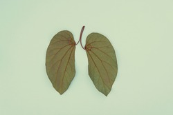 Lung shaped leaves,Lung cancer, world tuberculosis day, world no tobacco day, Pulmonary hypertension, covid-19 coronavirus, eco air pollution, organ donation concept