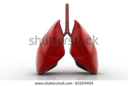 lungs isolated on white background