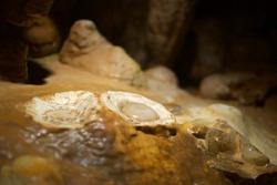 Lurey Caverns in Virginia USA
