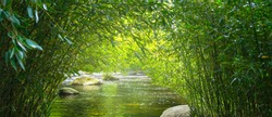 lush bamboo leaves from bamboo trees in a bamboo forest with water and stones, beautiful landscape background, fresh green jungle