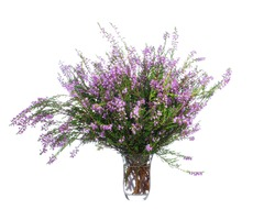 Lush bouquet of blooming heather in a glass vessel with water