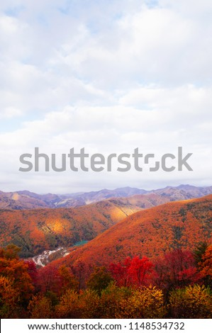 Lush colourful autumn forest of Taebaek Mountain range, Gangwon-do, South Korea