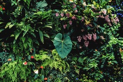 Lush foliage background. Green plant wall design of tropical leaves (anthurium, epiphytes or ferns). Dark green plants growing in cloud forest, rainforest in tropical climate