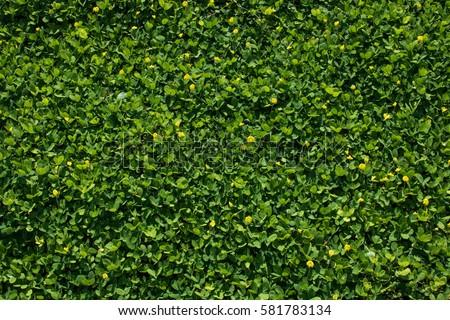 lush foliage,tiny #581783134