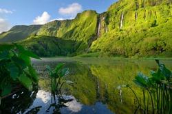 lush forest in the Poço da Alagoinha, Flores island, Azores, Portugal