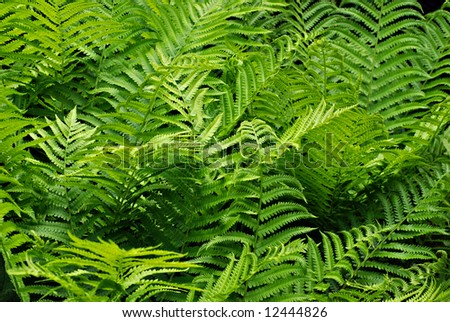 Lush green ferns with new growth.
