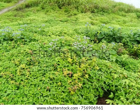 Lush Green Flowers #756906961