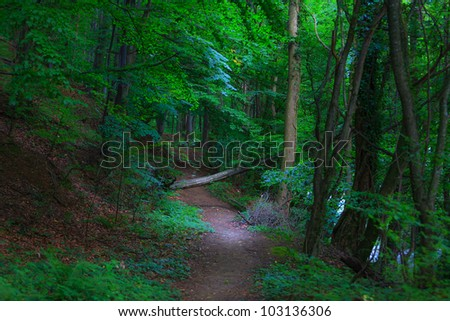 Lush green foliage, birch trees trail and  in the forest in summer
