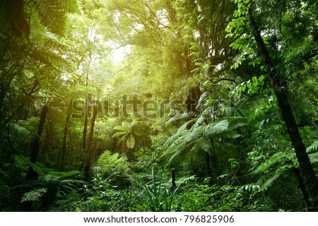 Lush green foliage in tropical jungle  #796825906