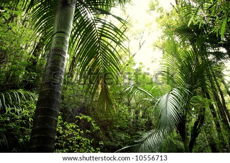 Lush green foliage in tropical rain forest