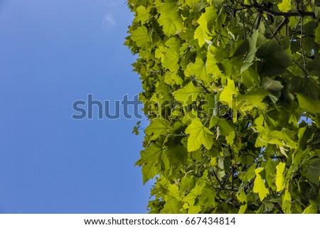 Lush green foliage on clear blue sky background half copy space