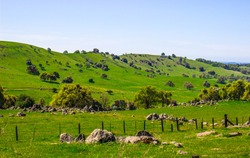 Lush Green Foothills In Sierra Nevada
