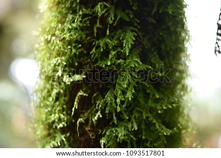 Lush Green Forest #1093517801