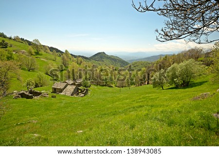 Lush green forest of beech tree glowing in afternoon light, with green meadows, pasture huts and snowcapped high mountain range in the background. Location: Torino Province, Piedmont, Italy.