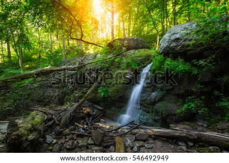 Lush green forest with a small stream and waterfall