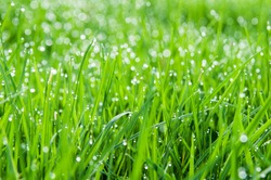lush green grass covered in early morning dew