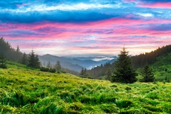 Lush green grass covered mountains meadow in sunset time. Purple light glowing on a foreground. Landscape photography. Nature background