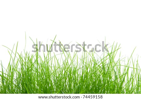 Lush green grass creates a natural frame along the lower edge with ample copy space