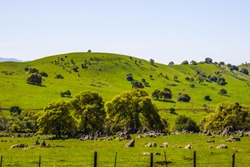 Lush Green Hillside In Sierra Nevada Foothills