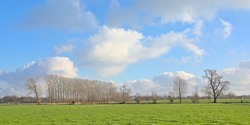 Lush green meadow with bare willlow trees under a blue sky with fluffye clouds in Oude Kalevallei nature reserve, Ghent, Flanders, Belgium