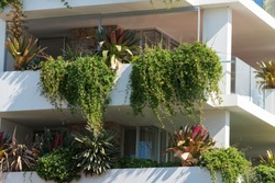 Lush green plants growing on white building. Urban garden, green space sustainable living