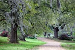 Lush green scene