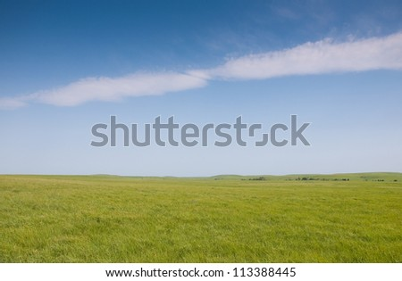 Lush green spring grass in wide open prairie pasture in late spring