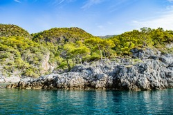 Lush green trees and shrubbery on rocky island