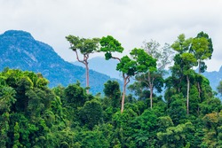 Lush green tropical rainforest with background mountain
