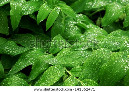 Lush green vegetation with rain droplets after a spring rain storm