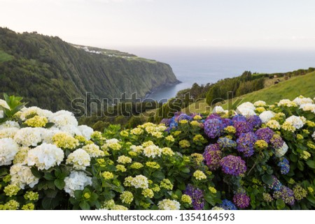 Lush Hydrangea flowers overlooking a bay view of the ocean in Sao Miguel island, in Azores, Portugal.