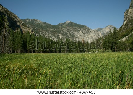 Lush Mountain Meadow