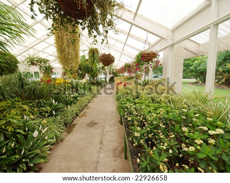 Lush ornamental plants growing in a long greenhouse