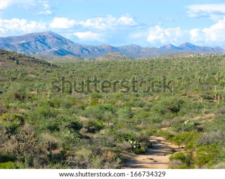 Lush section of the Sonoran desert landscape, Arizona