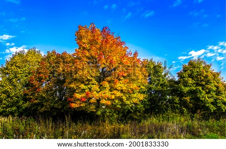 Lush trees in the forest in autumn. Autumn trees. Trees in autumn. Autumn tree
