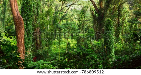 Lush tropical jungle durig day time
