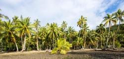 Lush tropical jungle with many palm trees on an island