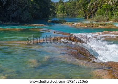 Lush tropical rainforest by the Agua Azul cascades, Chiapas, Mexico. Foto stock ©
