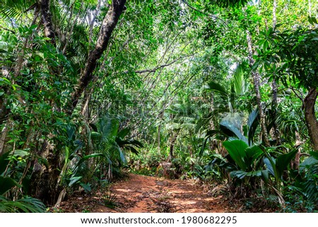 Lush tropical vegetation in dark rainforest with endemic palm trees at Glacis Noire nature trail leading to the highest peak of Praslin Island - Mont Azore. Seychelles. Photo stock ©