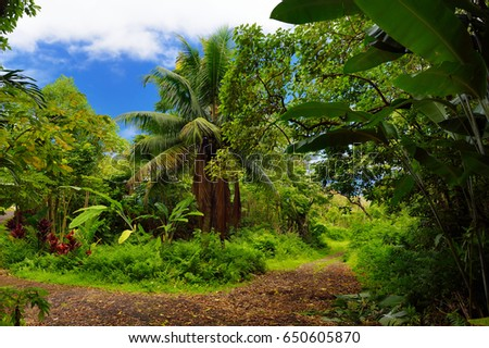 Lush tropical vegetation of the islands of Hawaii, USA #650605870