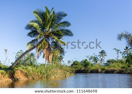 Lush tropical vegetation on the riverbanks
