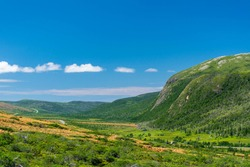 Lush vegetation in The Tablelands, Newfoundland, Canada