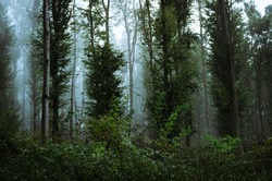 lush vegetation in woods, rainy weather in dense forest
