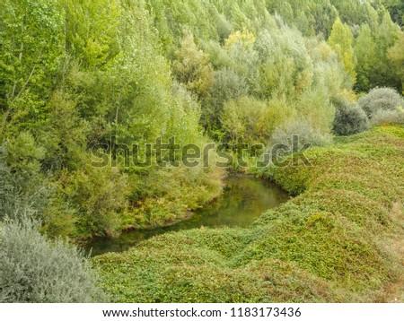 Lush vegetation on the banks of the Esla river - Mansilla de las Mullas, Castile and Leon, Spain #1183173436