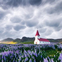 Lutheran Myrdal church surrounded by blooming lupine flowers, Vik, Iceland. Stormy sky with menacing mammatus clouds on background. Landscape photography