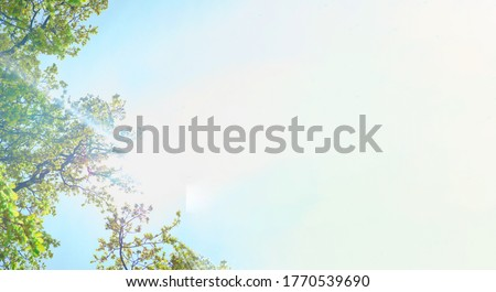 Luxuriant bright green trees and sun lights against clear blue sky. View from below into treetops of beeches on sunny day. Summertime banner with white background for copy space. Foto stock ©