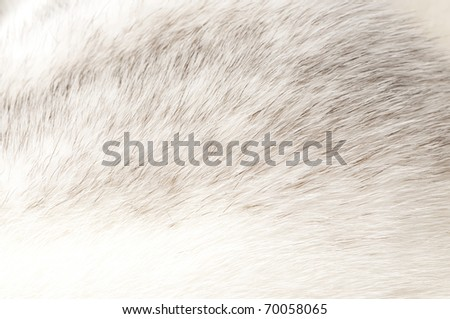 luxurious mink fur texture close-up background