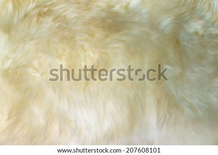 Luxurious wool texture from a white sheepskin rug