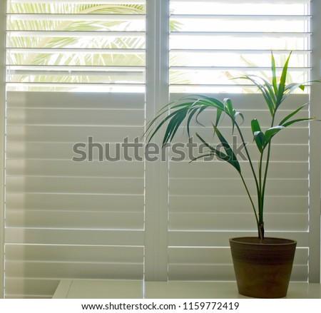 Luxury white indoor plantation shutters